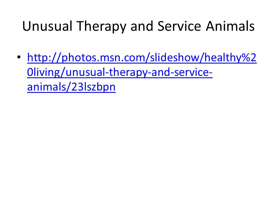 Unusual Therapy and Service Animals