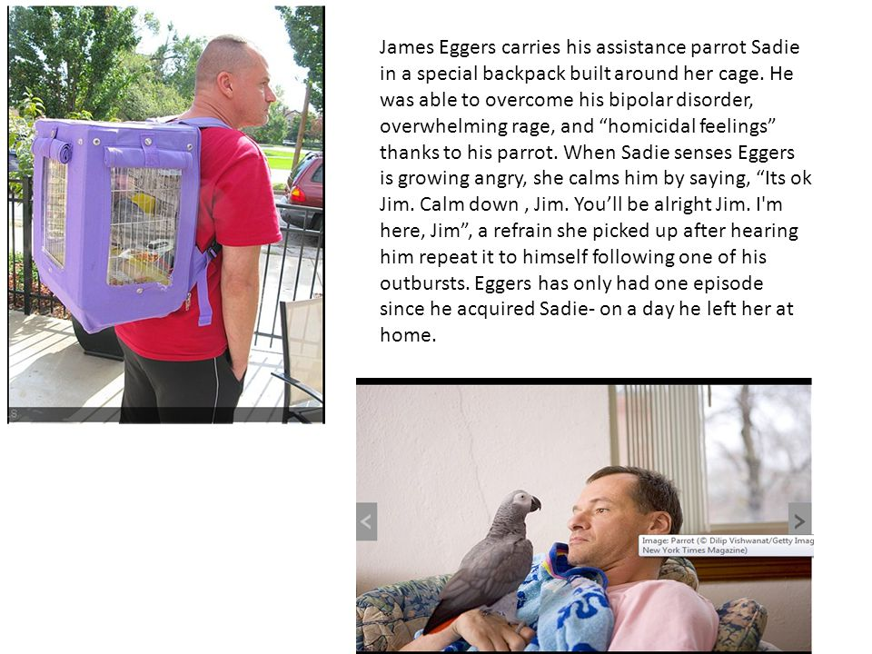 James Eggers carries his assistance parrot Sadie in a special backpack built around her cage.
