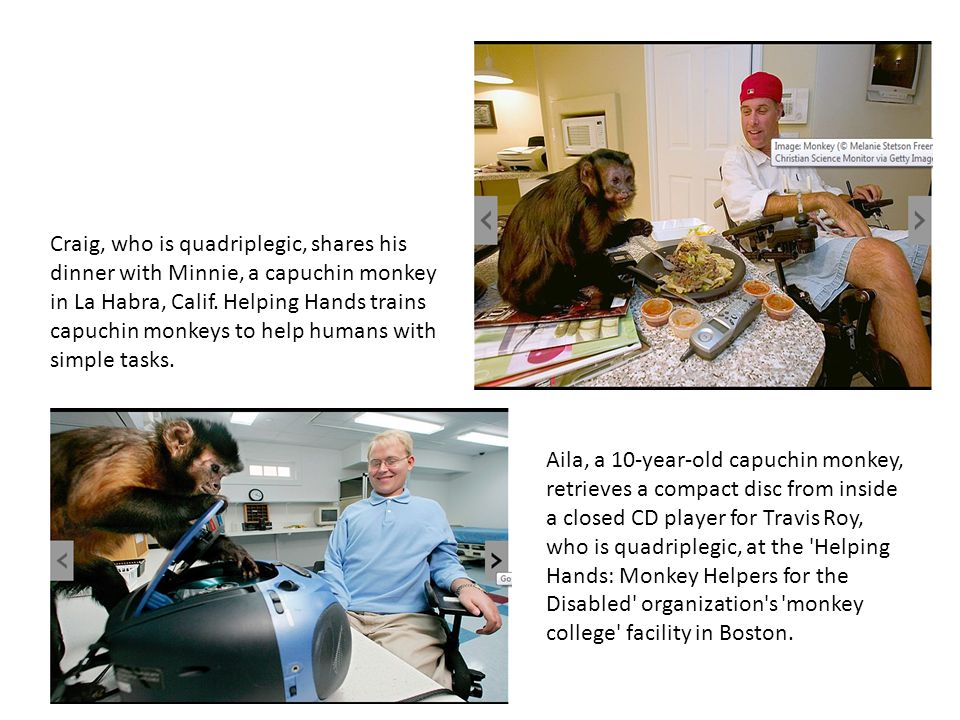 Craig, who is quadriplegic, shares his dinner with Minnie, a capuchin monkey in La Habra, Calif. Helping Hands trains capuchin monkeys to help humans with simple tasks.
