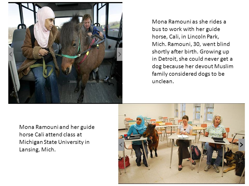 Mona Ramouni as she rides a bus to work with her guide horse, Cali, in Lincoln Park, Mich. Ramouni, 30, went blind shortly after birth. Growing up in Detroit, she could never get a dog because her devout Muslim family considered dogs to be unclean.