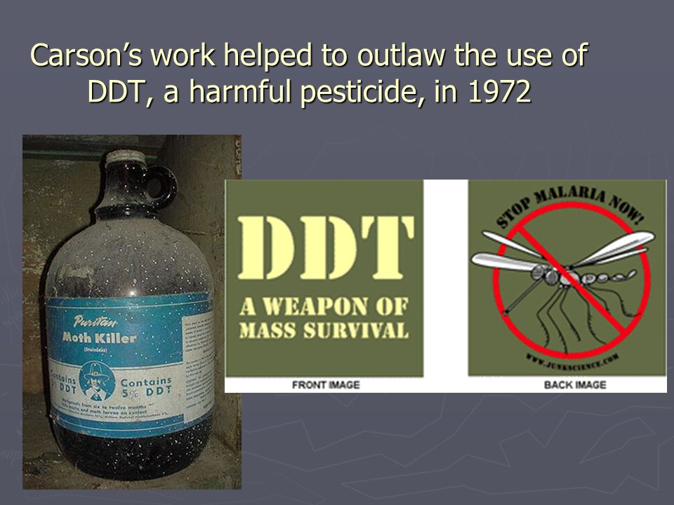 Carson's work helped to outlaw the use of DDT, a harmful pesticide, in 1972