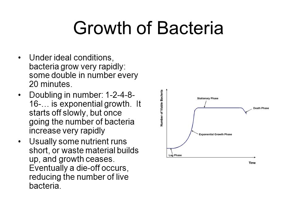 Growth of Bacteria Under ideal conditions, bacteria grow very rapidly: some double in number every 20 minutes.