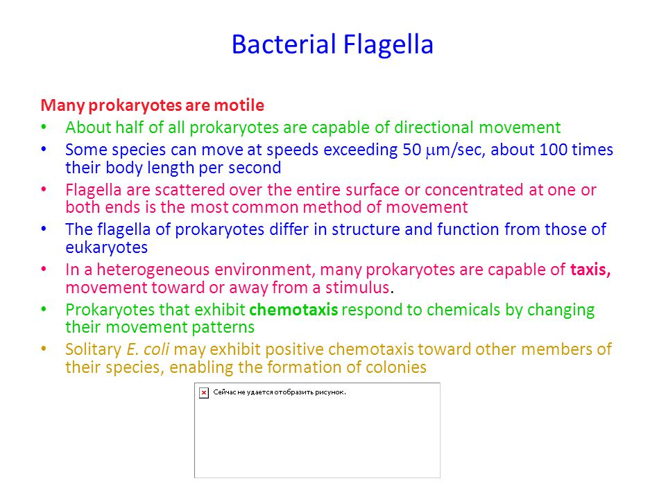 Bacterial Flagella Many prokaryotes are motile