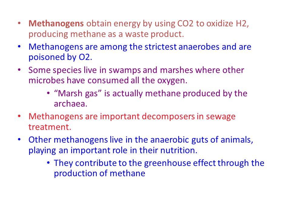 Methanogens obtain energy by using CO2 to oxidize H2, producing methane as a waste product.