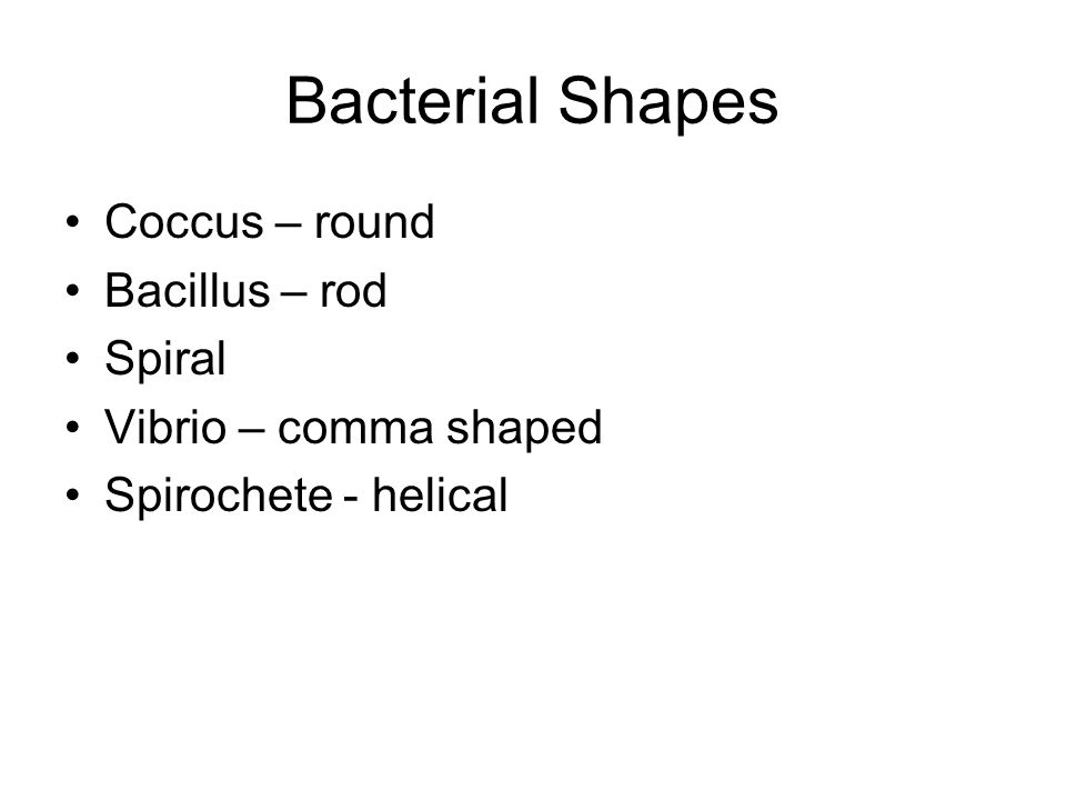 Bacterial Shapes Coccus – round Bacillus – rod Spiral
