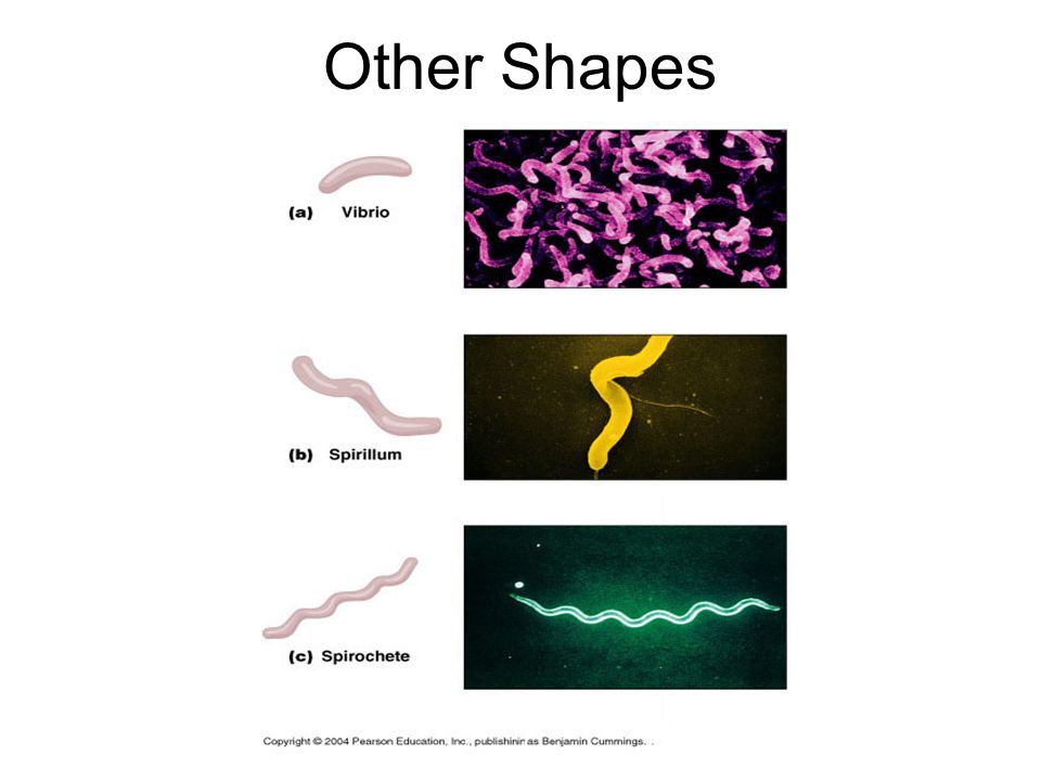 Other Shapes