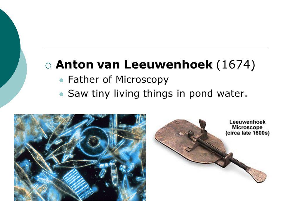Anton van Leeuwenhoek (1674)