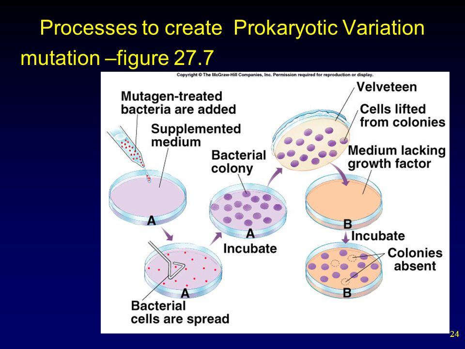 Processes to create Prokaryotic Variation