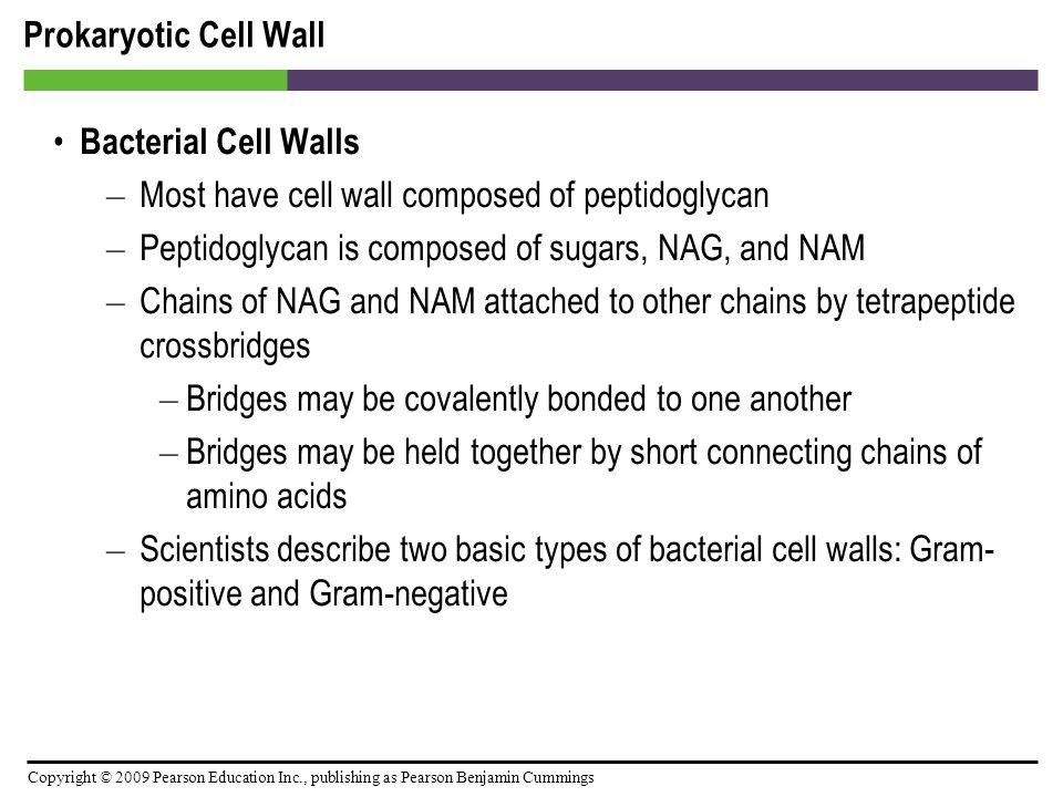 Prokaryotic Cell Wall Bacterial Cell Walls. Most have cell wall composed of peptidoglycan. Peptidoglycan is composed of sugars, NAG, and NAM.