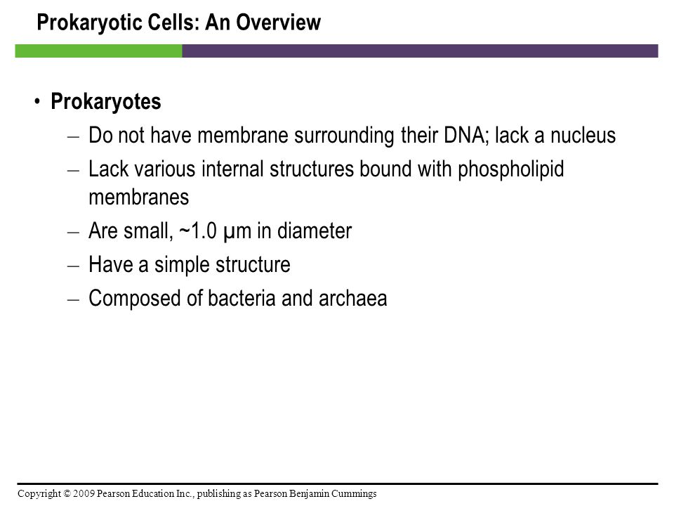 Prokaryotic Cells: An Overview