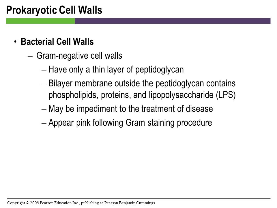 Prokaryotic Cell Walls