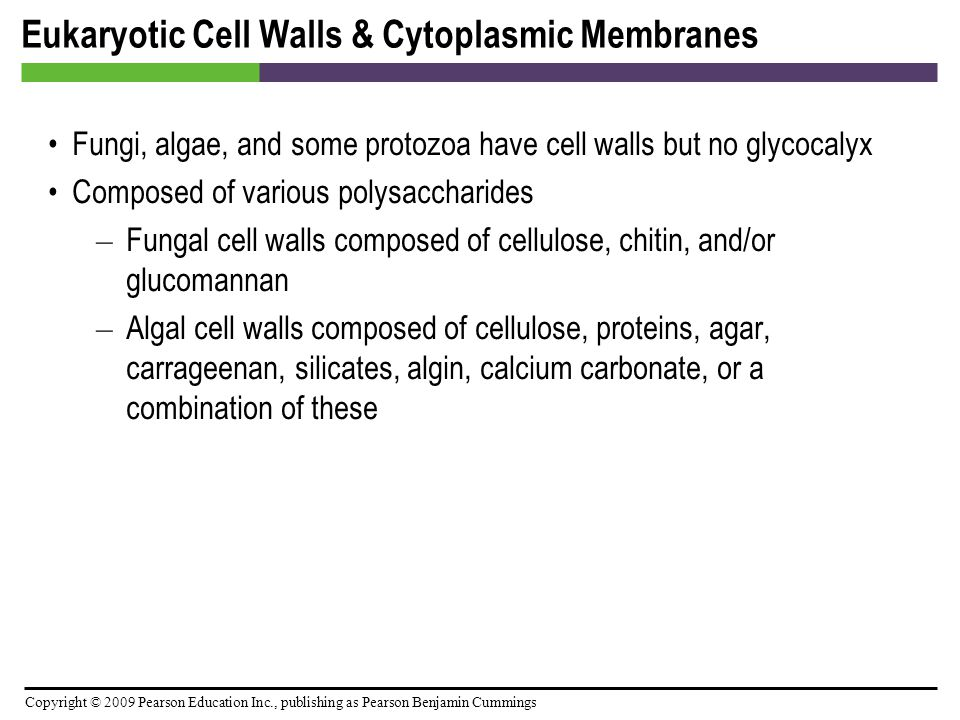 Eukaryotic Cell Walls & Cytoplasmic Membranes