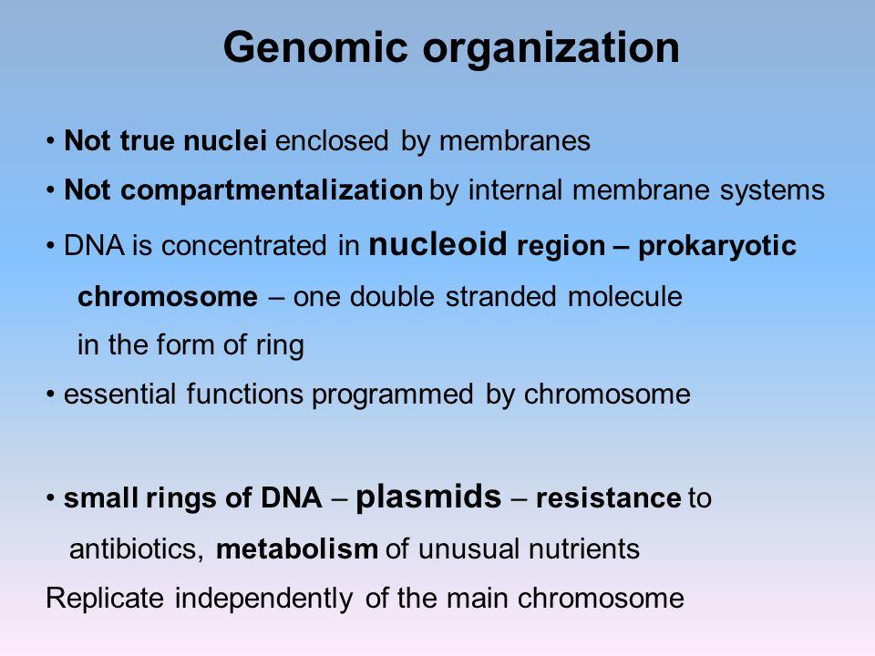 Genomic organization Not true nuclei enclosed by membranes