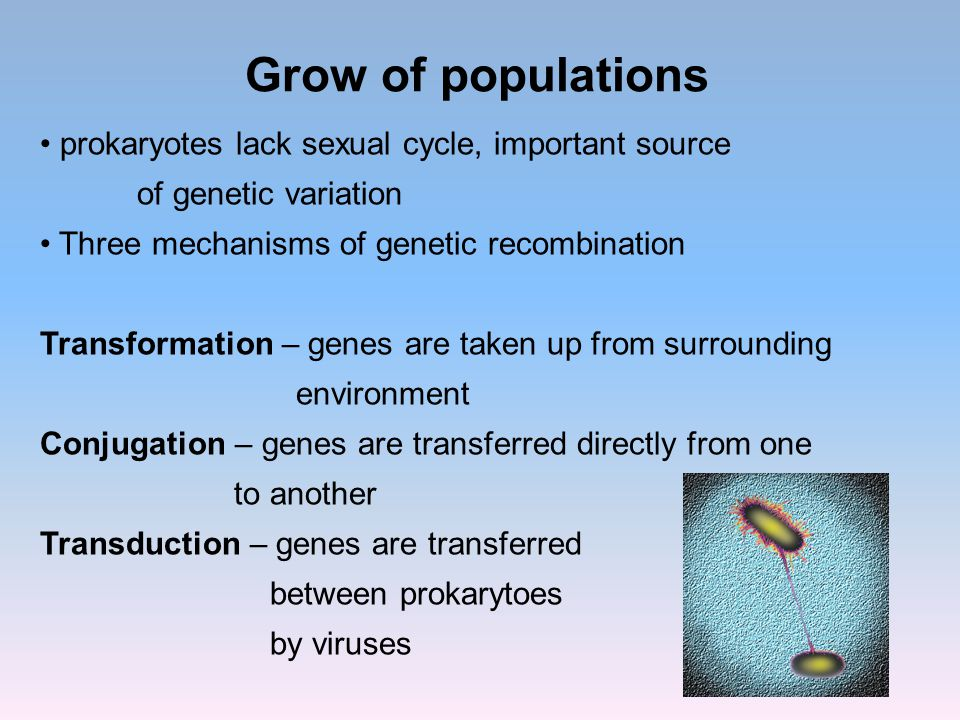 Grow of populations prokaryotes lack sexual cycle, important source