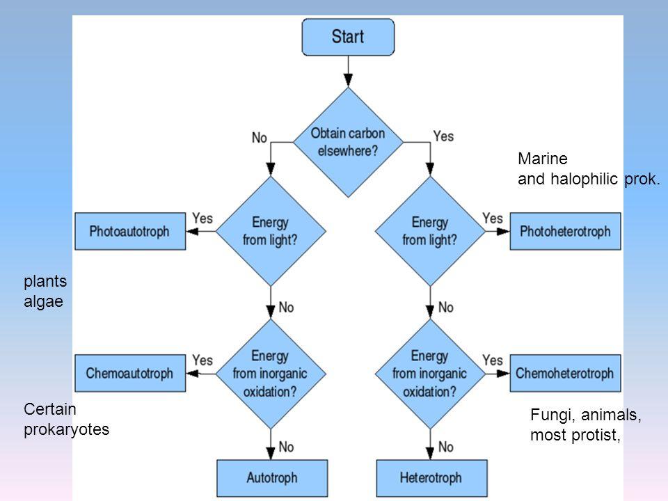 Marine and halophilic prok. plants algae Certain Fungi, animals,