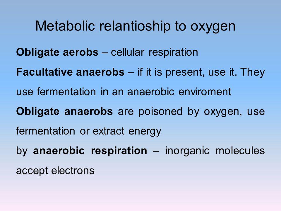 Metabolic relantioship to oxygen