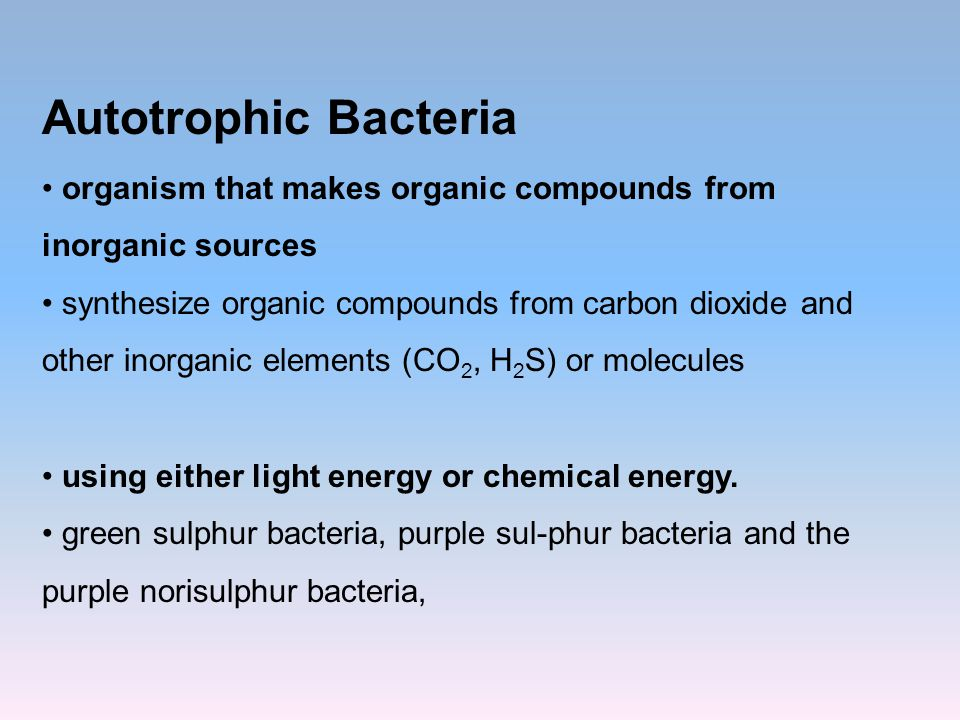 Autotrophic Bacteria organism that makes organic compounds from inorganic sources.