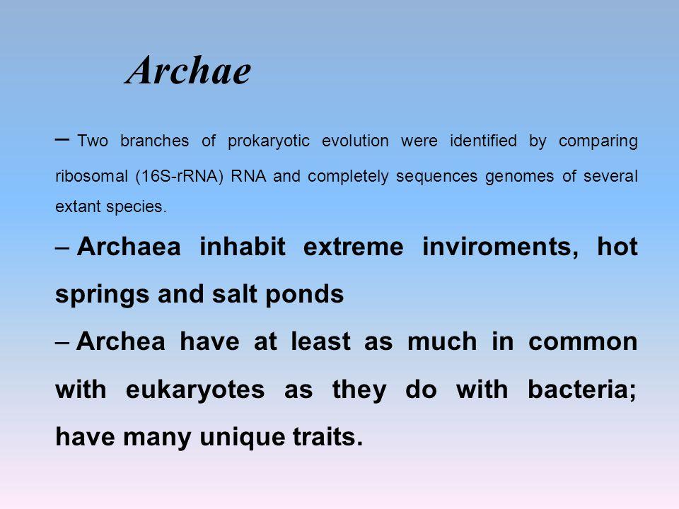 Archae