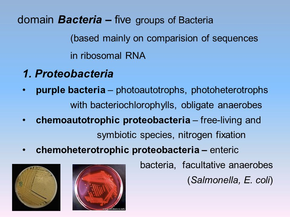 domain Bacteria – five groups of Bacteria (based mainly on comparision of sequences in ribosomal RNA