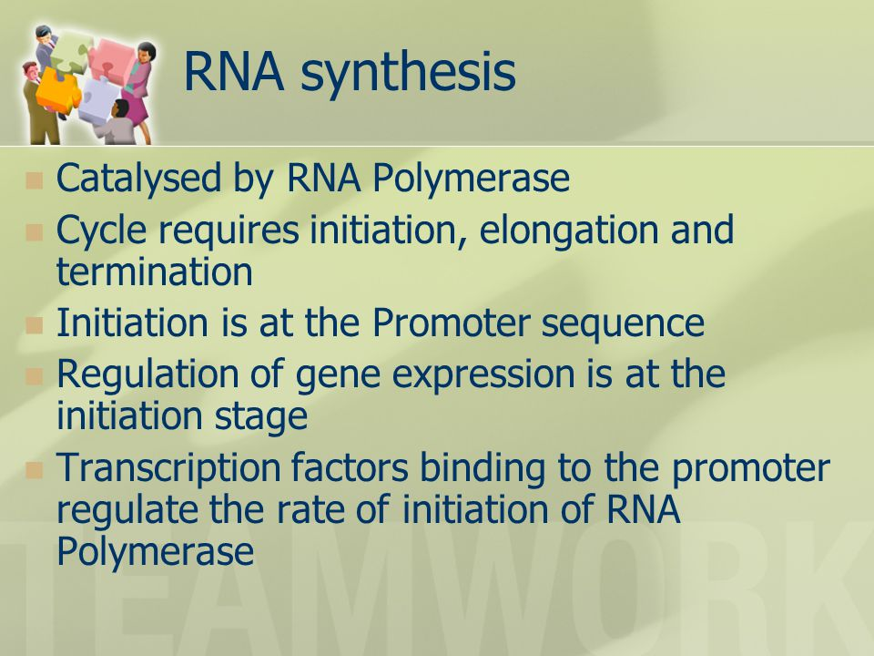 RNA synthesis Catalysed by RNA Polymerase