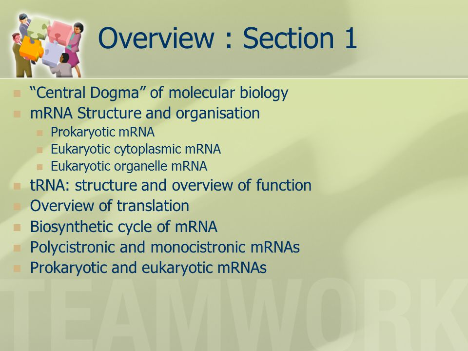 Overview : Section 1 Central Dogma of molecular biology