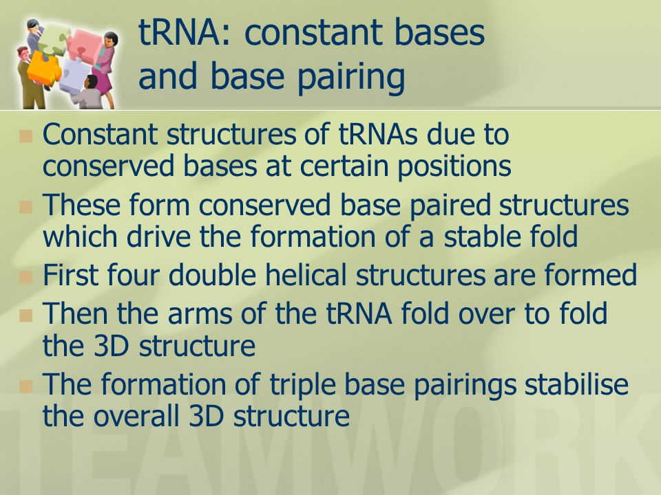 tRNA: constant bases and base pairing