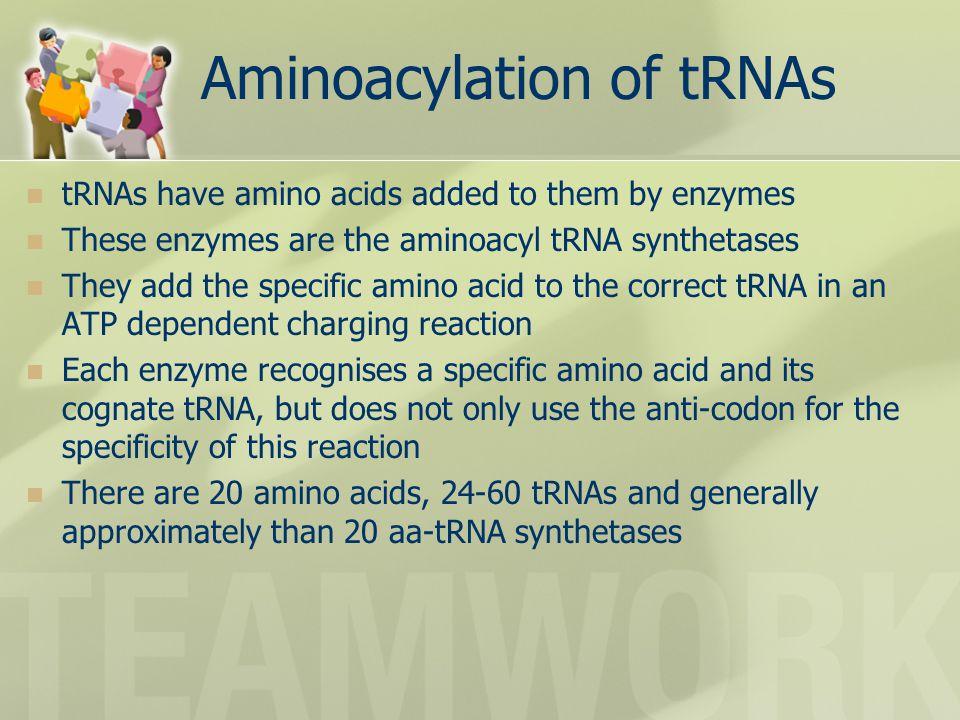 Aminoacylation of tRNAs