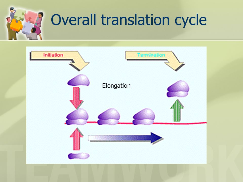 Overall translation cycle