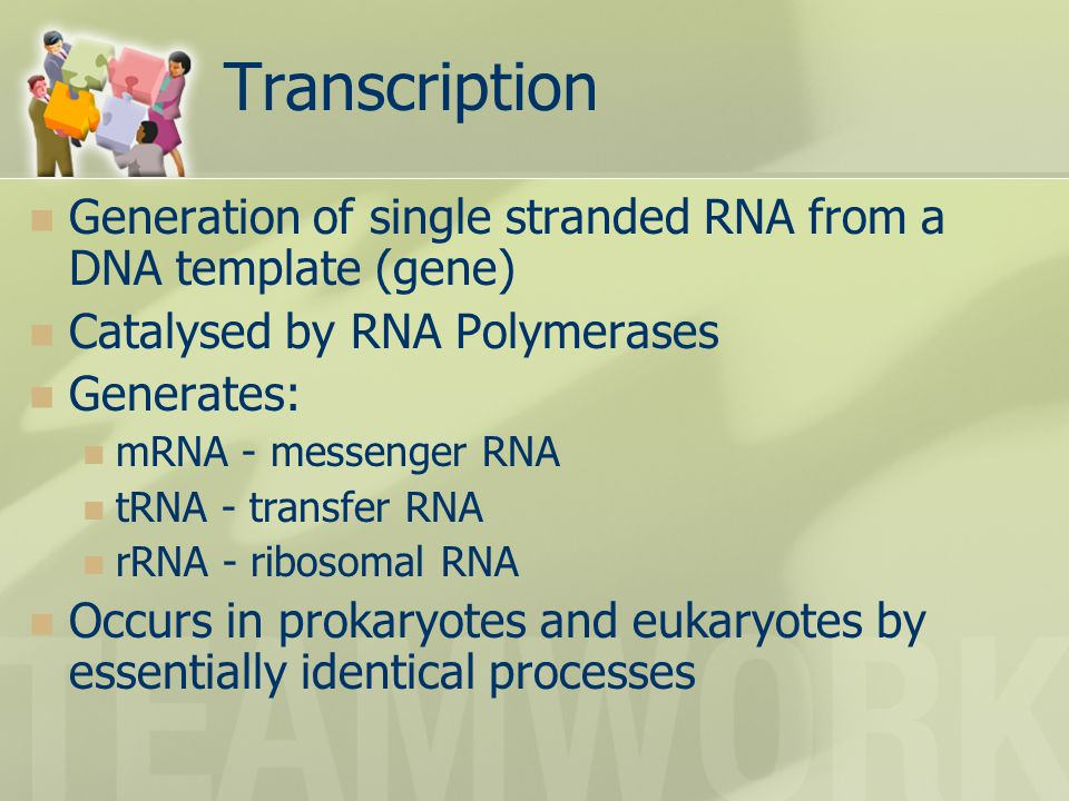 Transcription Generation of single stranded RNA from a DNA template (gene) Catalysed by RNA Polymerases.