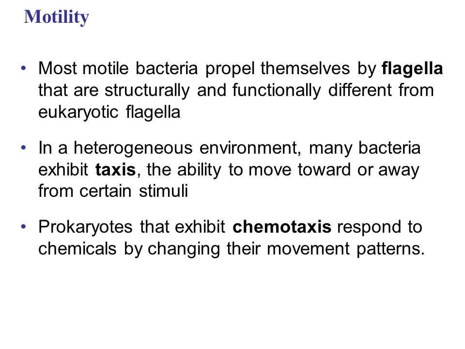 Motility Most motile bacteria propel themselves by flagella that are structurally and functionally different from eukaryotic flagella.