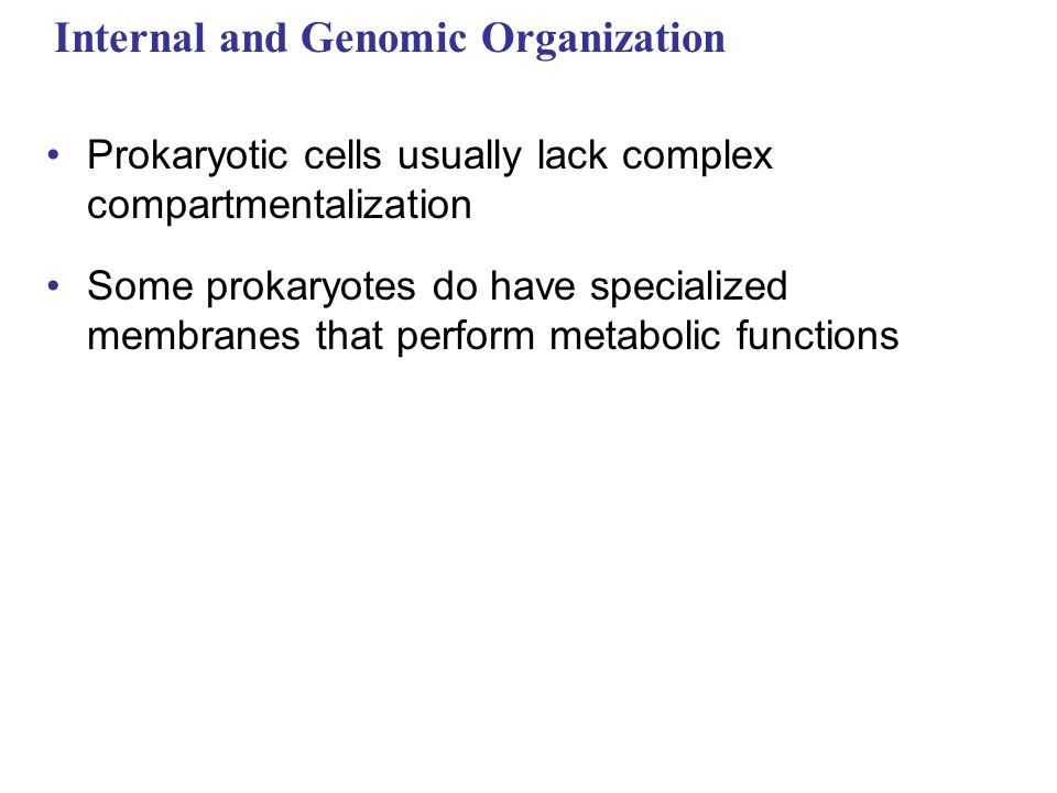 Internal and Genomic Organization