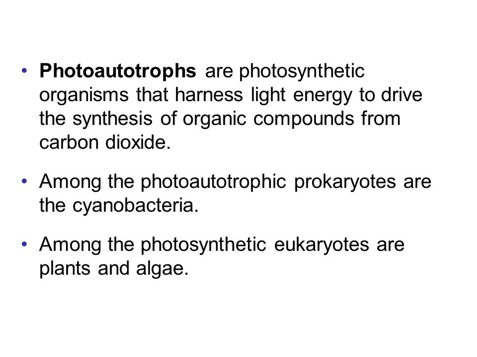Photoautotrophs are photosynthetic organisms that harness light energy to drive the synthesis of organic compounds from carbon dioxide.