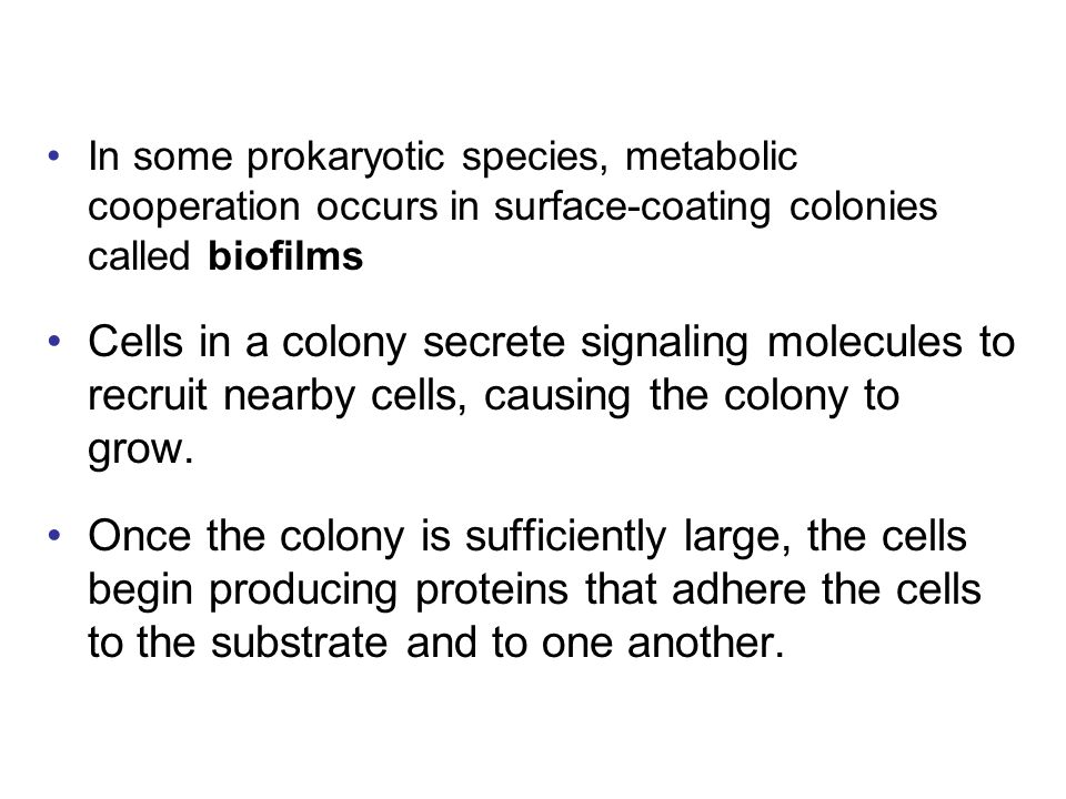 In some prokaryotic species, metabolic cooperation occurs in surface-coating colonies called biofilms