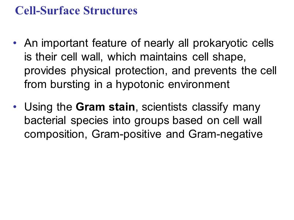 Cell-Surface Structures