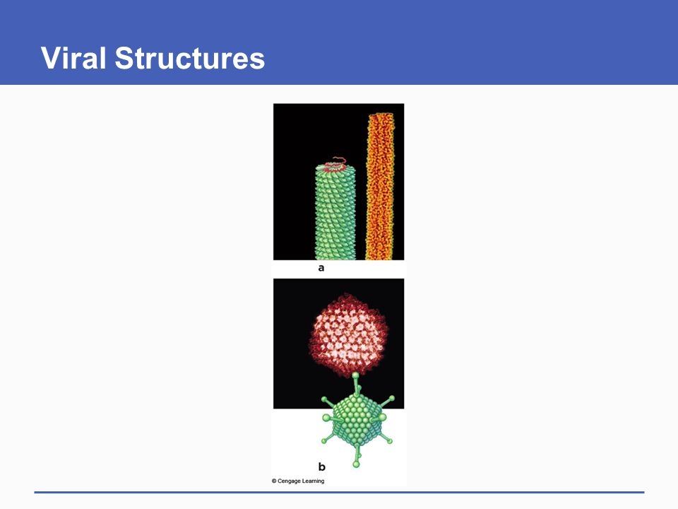 Viral Structures