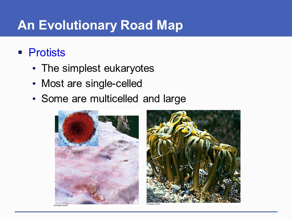 An Evolutionary Road Map