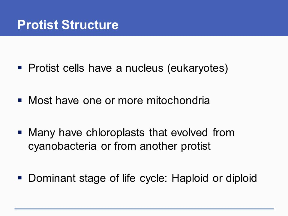 Protist Structure Protist cells have a nucleus (eukaryotes)