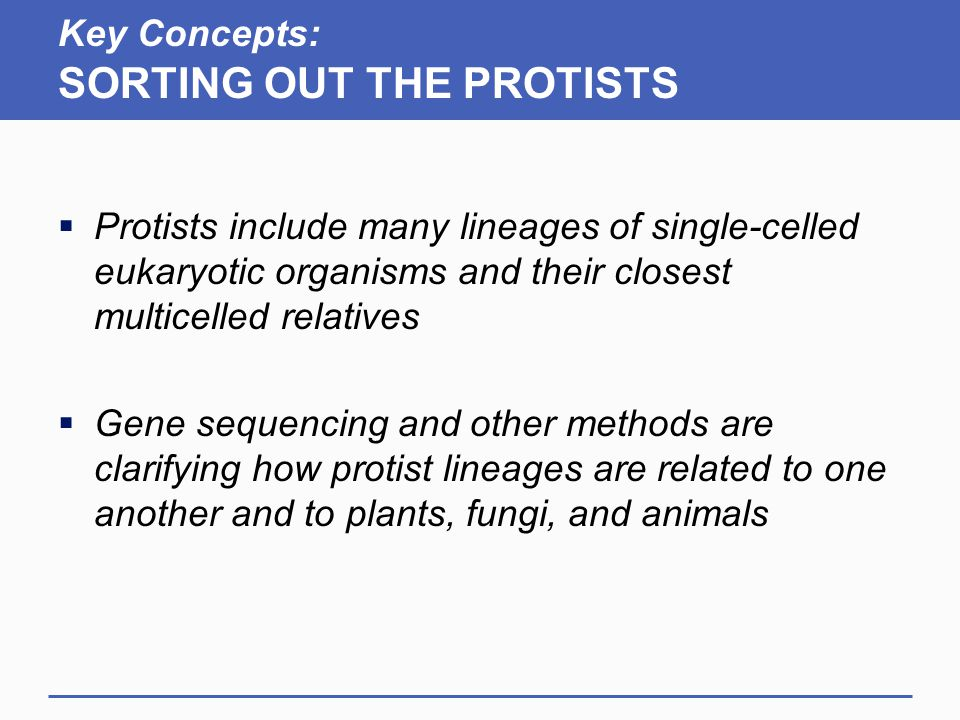 Key Concepts: SORTING OUT THE PROTISTS