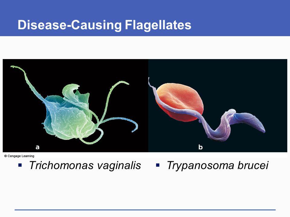 Disease-Causing Flagellates
