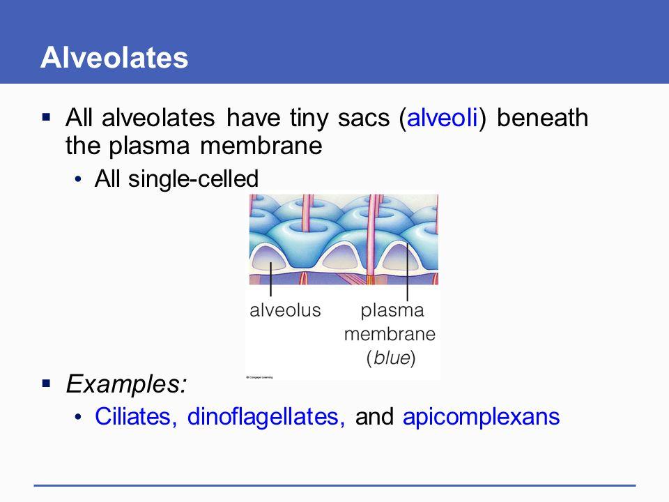 Alveolates All alveolates have tiny sacs (alveoli) beneath the plasma membrane. All single-celled.