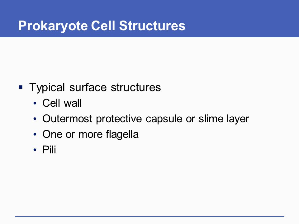 Prokaryote Cell Structures
