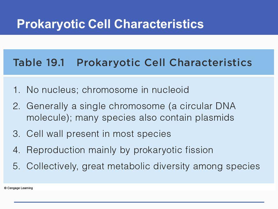 Prokaryotic Cell Characteristics