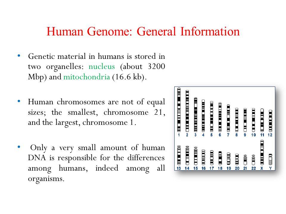 Human Genome: General Information