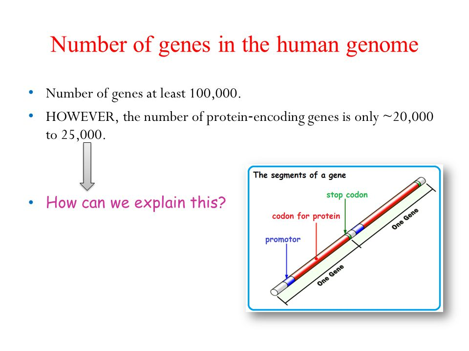 Number of genes in the human genome