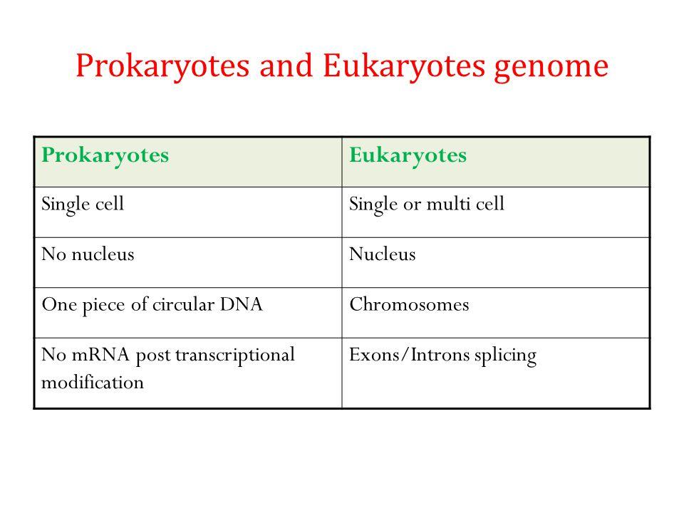 Prokaryotes and Eukaryotes genome