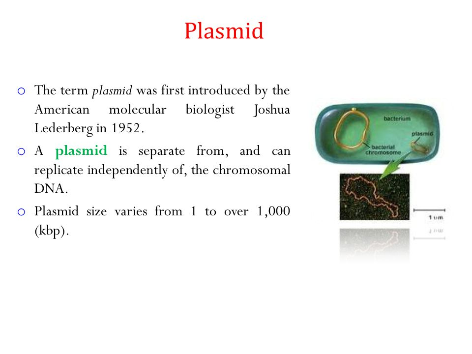 Plasmid The term plasmid was first introduced by the American molecular biologist Joshua Lederberg in 1952.