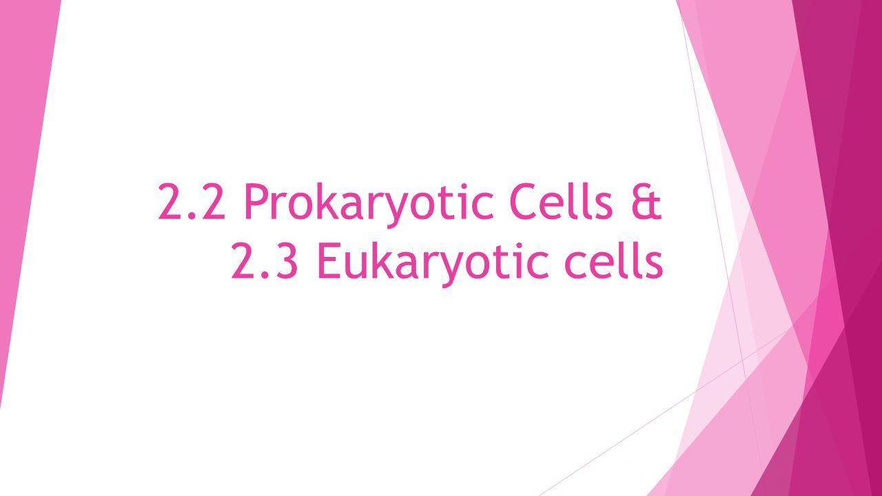 2.2 Prokaryotic Cells & 2.3 Eukaryotic cells