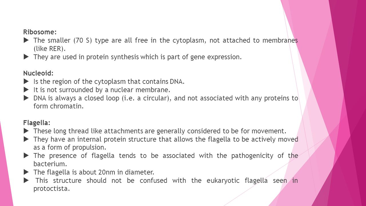 Ribosome: The smaller (70 S) type are all free in the cytoplasm, not attached to membranes (like RER).
