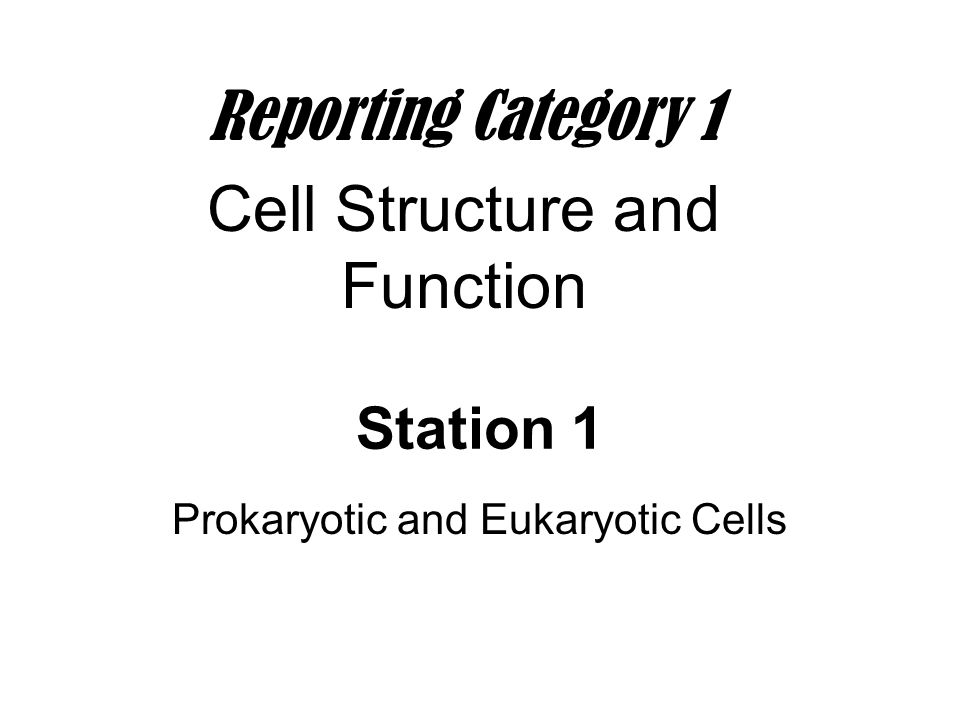 Prokaryotic and Eukaryotic Cells