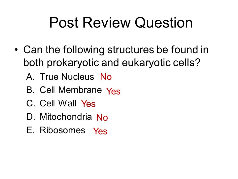 Post Review Question Can the following structures be found in both prokaryotic and eukaryotic cells